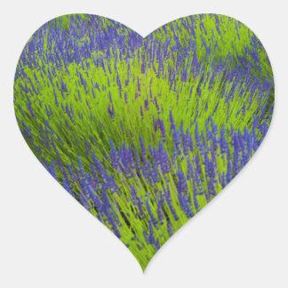 Lavanda de Provence Pegatina En Forma De Corazón