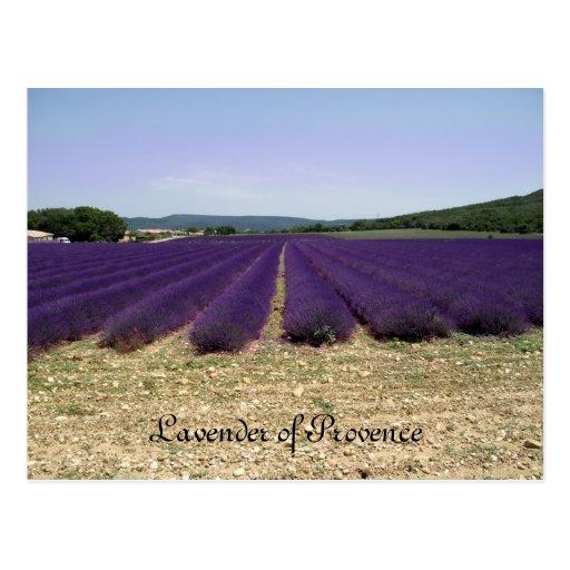 Lavanda de Provence Postal