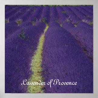 Lavanda de Provence Póster