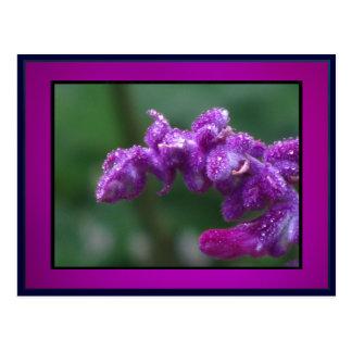 Lavanda púrpura postales