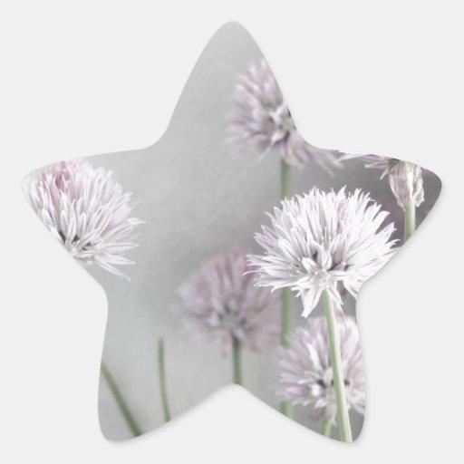Lavanda y flores verdes de la cebolleta en gris pegatinas forma de estrellaes personalizadas