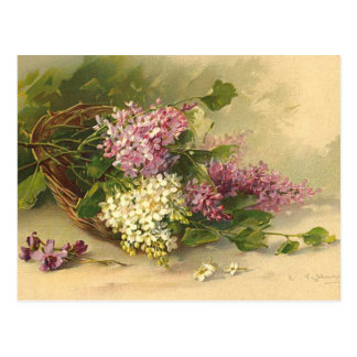 Lavander and White Beauty Postcard