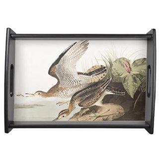 Lavandera de Bartram de la placa 303 de Audubon Bandejas