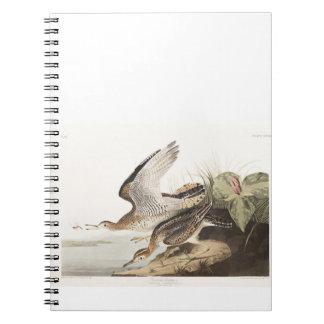 Lavandera de Bartram de la placa 303 de Audubon Libretas