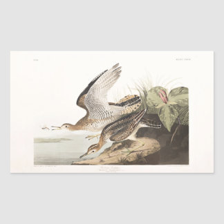 Lavandera de Bartram de la placa 303 de Audubon Pegatina Rectangular