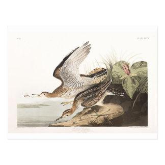Lavandera de Bartram de la placa 303 de Audubon Postal