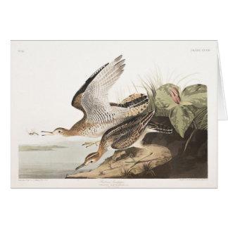 Lavandera de Bartram de la placa 303 de Audubon Tarjeta De Felicitación