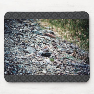 Lavandera de la roca alfombrilla de ratones