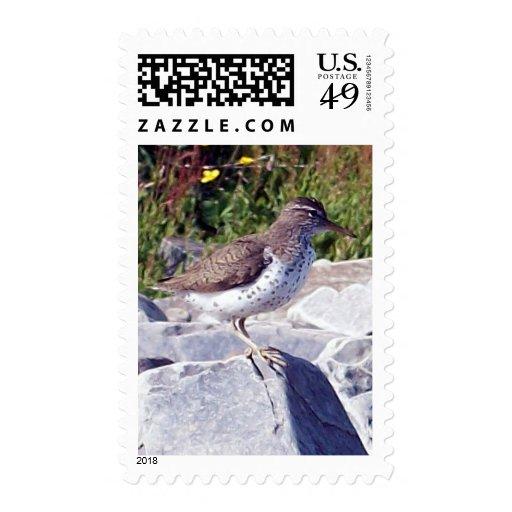 Lavandera manchada 1 sello
