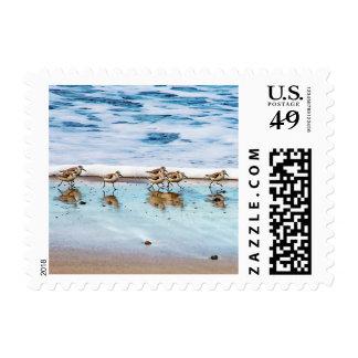 Lavanderas que corren a lo largo de la playa timbre postal