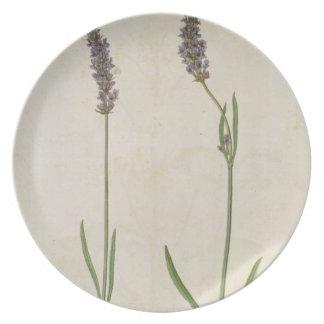 Lavandula officinalis (Old English Lavender), c.15 Melamine Plate