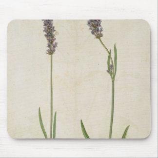 Lavandula officinalis (Old English Lavender), c.15 Mouse Pad