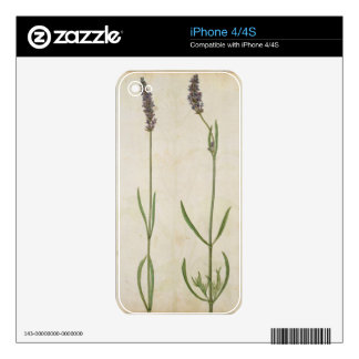 Lavandula officinalis (Old English Lavender), c.15 Decals For iPhone 4