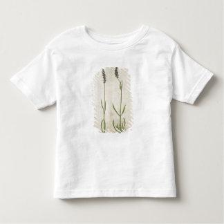 Lavandula officinalis (Old English Lavender), c.15 Toddler T-shirt