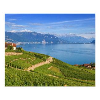 Lavaux region, Vaud, Switzerland Flyer