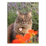 Lavendar, capuchina, y un gato de la concha tarjetas postales