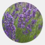 Lavendar el | Lavendel Pegatina Redonda