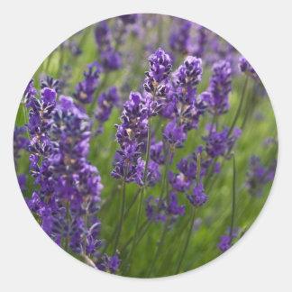 Lavendar el   Lavendel Pegatina Redonda