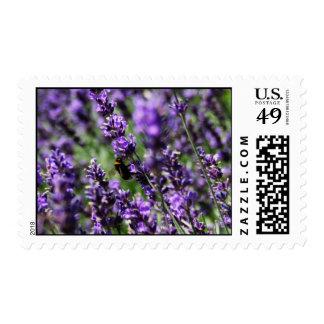 Lavendar Fields Postage Stamp