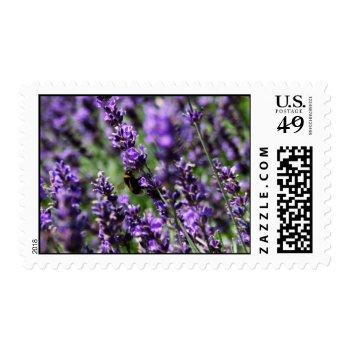 Lavendar Fields Postage Stamp by PerennialGardens at Zazzle