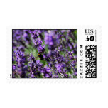 Lavendar Fields Postage Stamp
