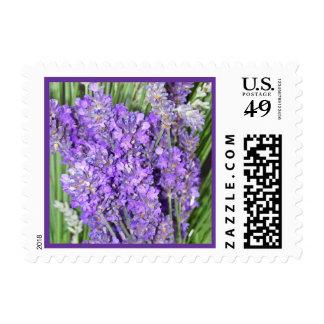 Lavendar Flower Postage Stamp