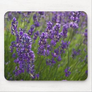 Lavendar | Lavendel Mouse Pad