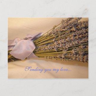 Lavendar Postcard postcard
