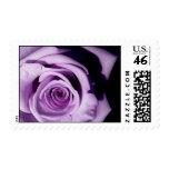Lavendar Rose U.S. Postage Stamp