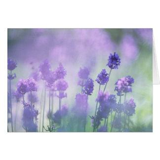 Lavender 2 greeting cards