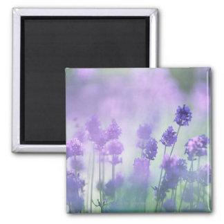 Lavender 2 magnet