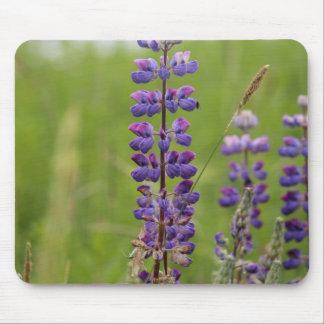 Lavender Alaskan Lupines Mouse Pad