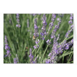 Lavender and Bee Cards