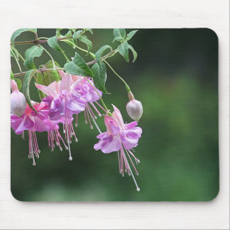 Lavender and pink fuchsias mouse pad