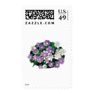 Lavender and White Stokes Asters Postage