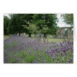 Lavender at Glastonbury Greeting Cards