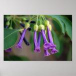 Lavender Bells Poster