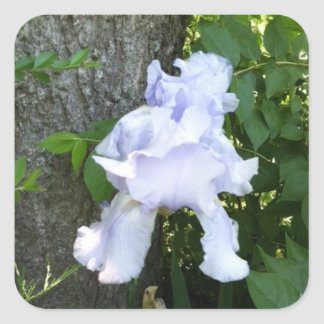 Lavender blue iris photo on stickers by bbillips