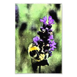 Lavender Bumblebee Fresco Photo Print