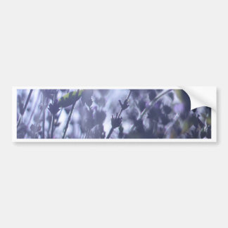 Lavender Bumper Sticker