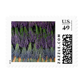 Lavender Bunches on Drying Rack Postage Stamp