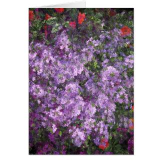Lavender Bush Card