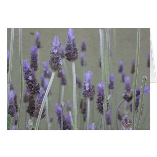 Lavender Card