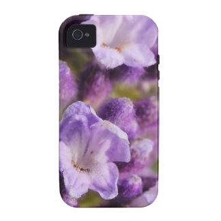 Lavender iPhone 4/4S Cases