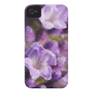 Lavender iPhone 4 Cases