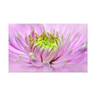Lavender-Chartreuse Dahlia Blossom Canvas Print