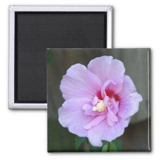 Lavender Chiffon Hibiscus 2 Inch Square Magnet