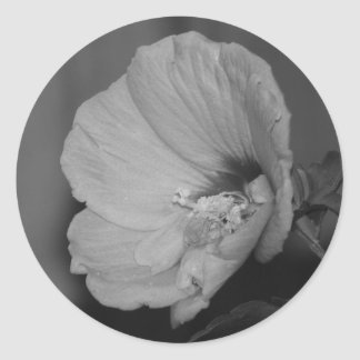Lavender Chiffon Hibiscus Classic Round Sticker