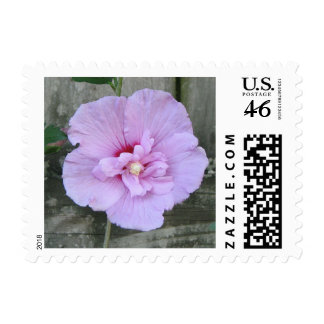 Lavender Chiffon Hibiscus Stamp