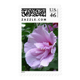 Lavender Chiffon Hibiscus Postage Stamps